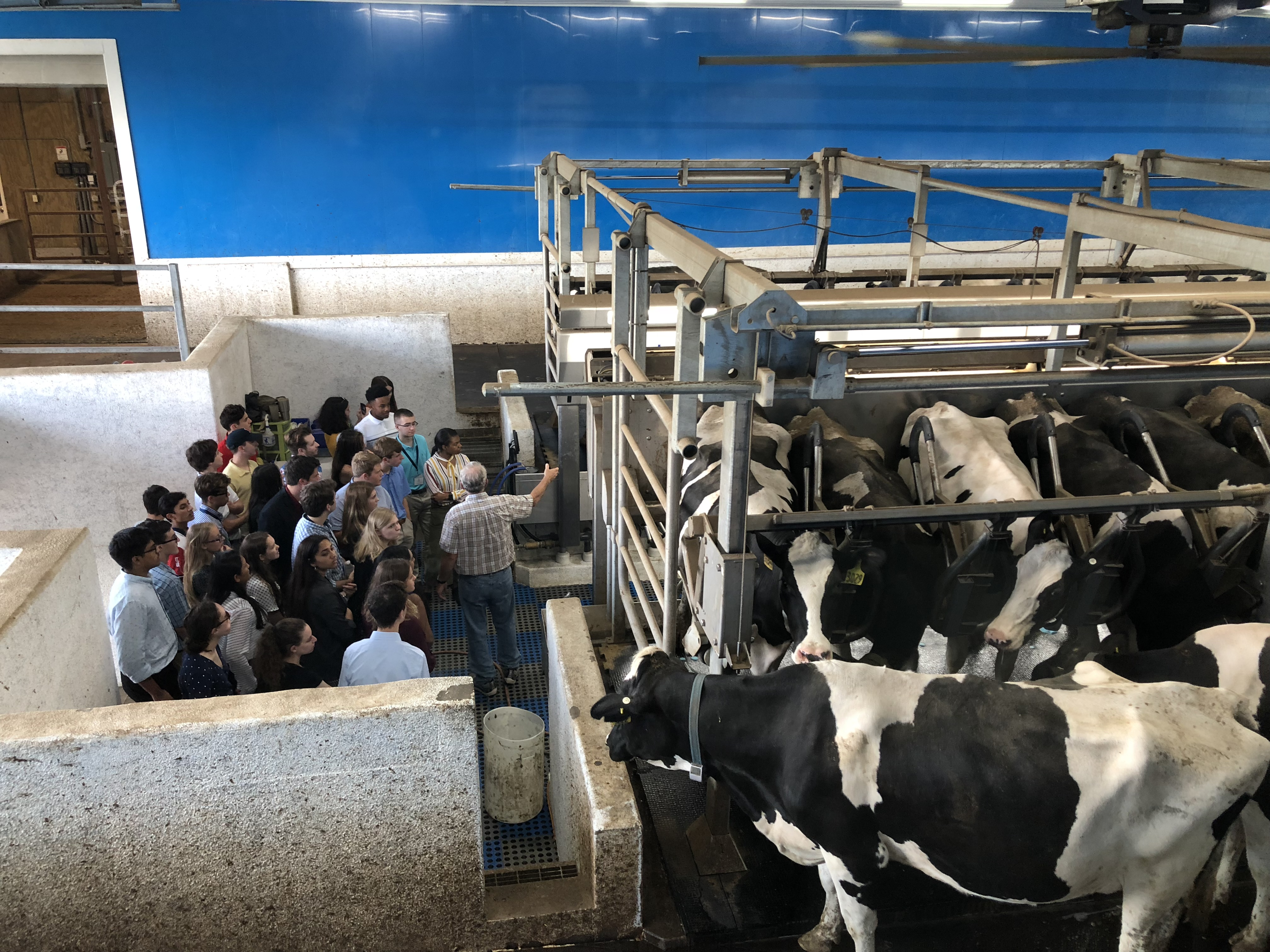 HSLP 2019 Dairy Farm day 5